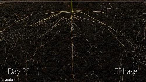 植物タイムラプス07