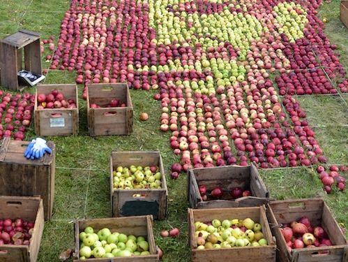 3500個のリンゴでジョブズ00