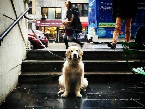 飼い主を待つ犬たち11