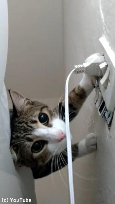 プラグを挿したい飼い主VSプラグを抜きたい猫05