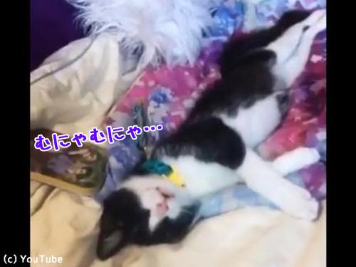 うちの猫の寝相00