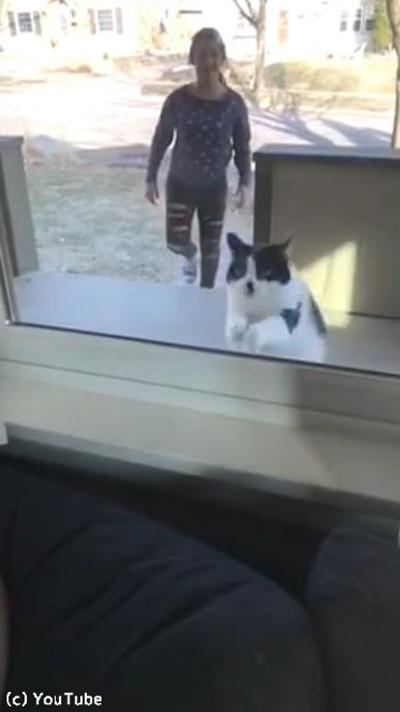 猫が帰宅に失敗02