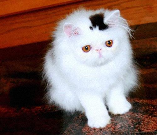 変わった毛並みの猫04