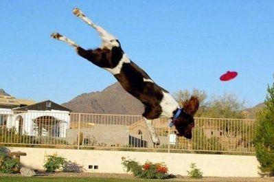 犬の身体能力凄い04