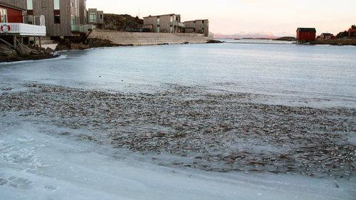 魚の群れが凍り付く02