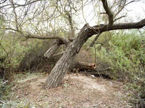 木に飲み込まれた男性00