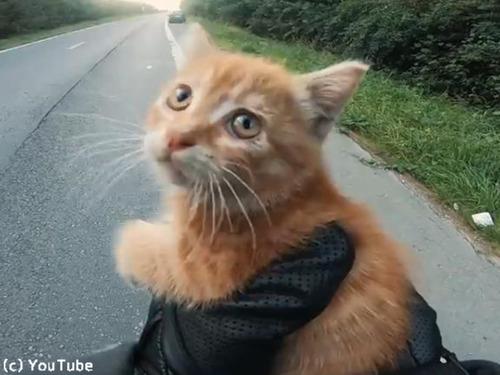 高速道路で子猫を救出00