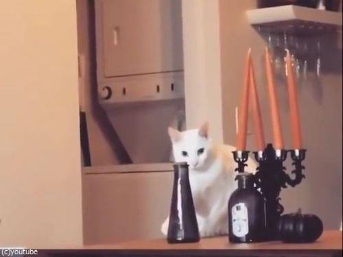 そっと動かして、そっと戻す猫(動画)03