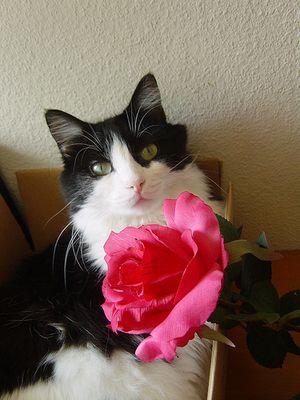 バラの似合うペット06