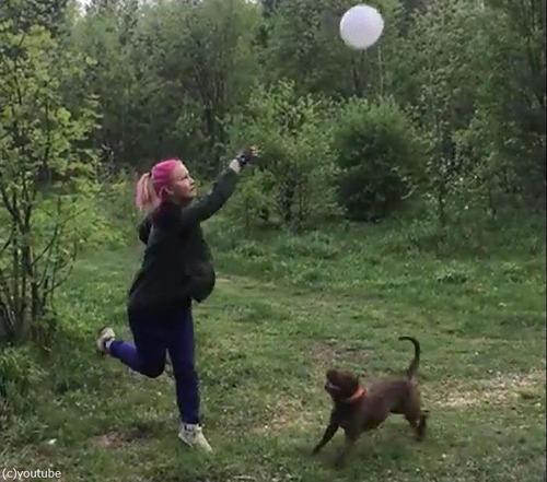 風船トスが上手な犬01