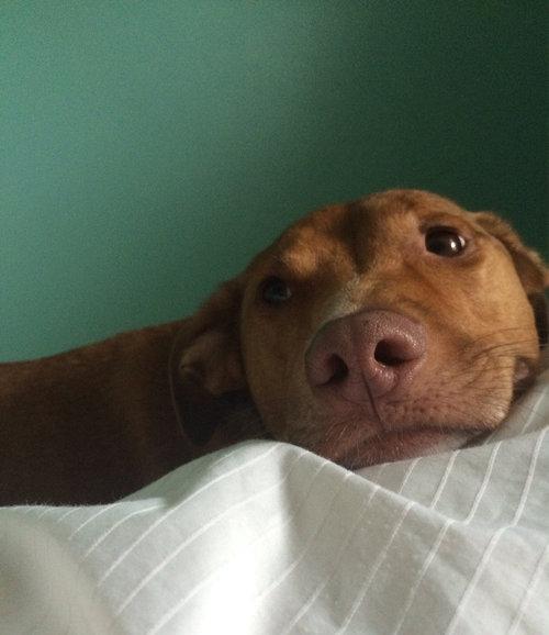 毎朝起こしてくれる犬や猫14
