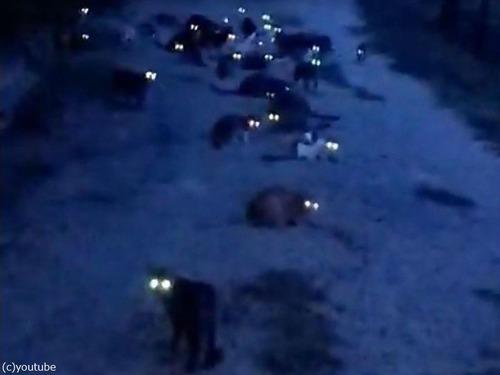 たくさんの猫の目が光る01