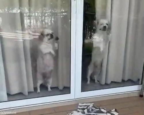 帰宅した飼い主を待ち切れない子犬たち00