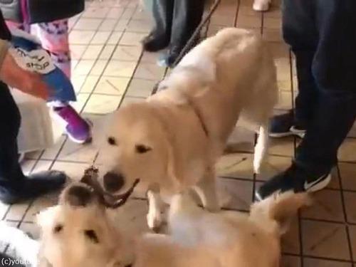 シアトルで出会った犬たちが姉妹だった01