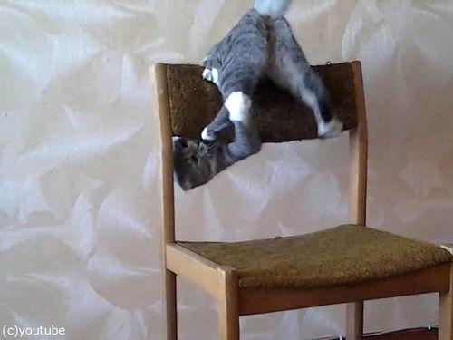猫がイスでアクロバティック07