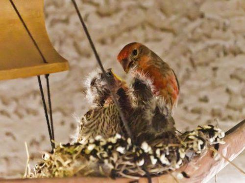 ウインドチャイムに鳥の巣06