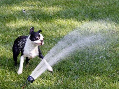 スプリンクラー犬09