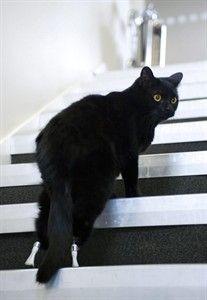 義足の猫オスカー03