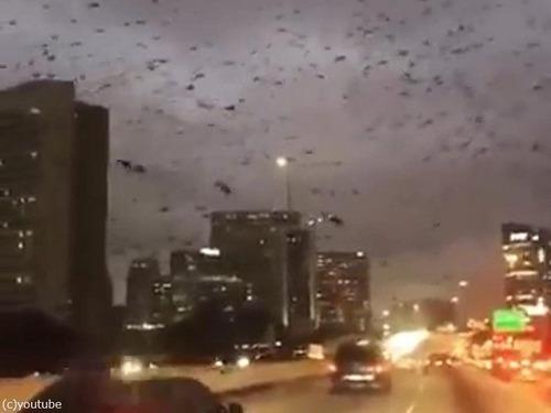 テキサス州の鳥は「この世の終わり」02