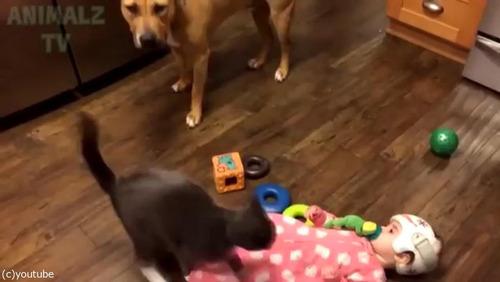 赤ちゃんに蹴られた猫、犬に八つ当たり06
