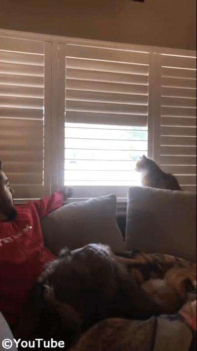 お外を見たい猫 VS ブラインドを閉めたい飼い主さん01