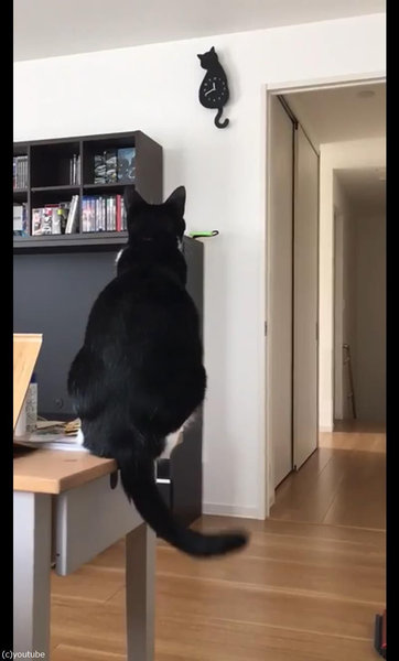 時計としっぽがシンクロする猫04