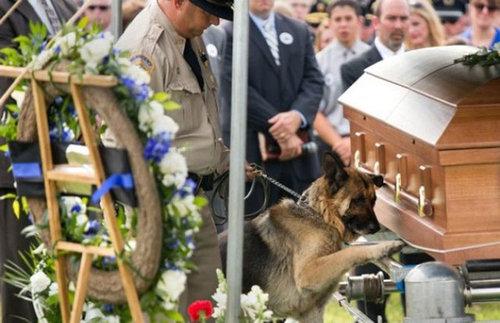 警察犬がパートナーにお別れを告げるとき01