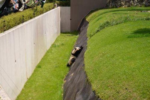 パンダのよいしょよいしょ01
