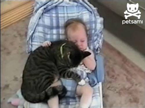 赤ちゃんと猫01