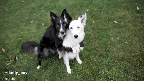 写真写りを気にする犬たち03