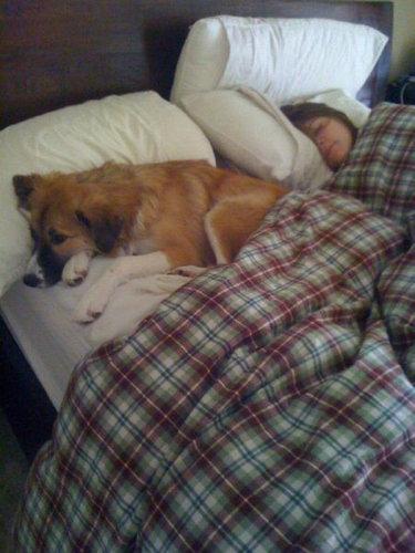 犬と一緒に寝ると01