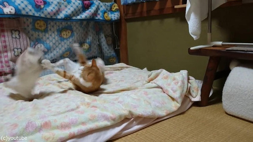 猫に挑むウサギ05