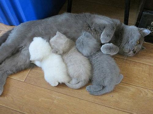 ママ猫&犬が子育てに奮闘してるときの顔06