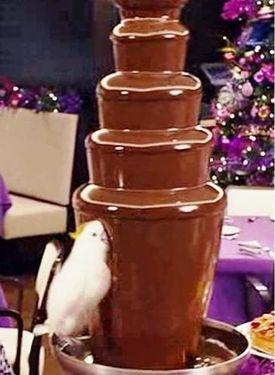 チョコレートと鳥03