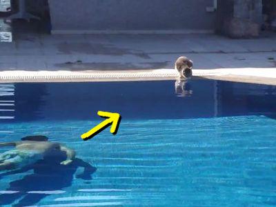 プールの猫