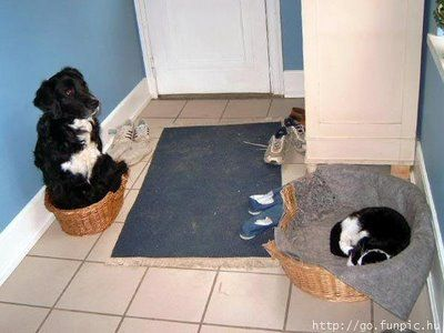 犬と猫の戦い03