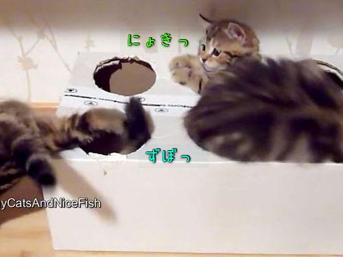 子猫と穴開きダンボール00