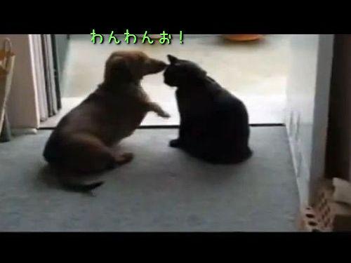 落ち着きのない犬をおとなしくさせる猫00