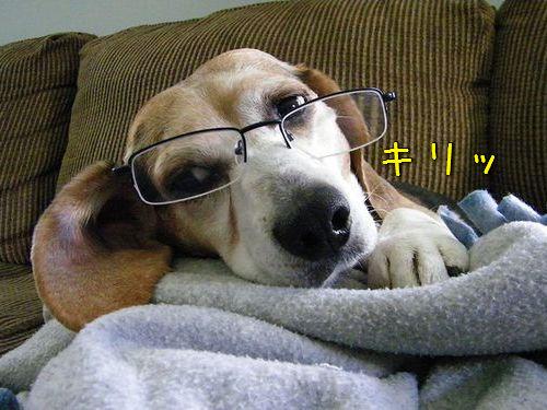 00メガネやサングラスをかける動物たち