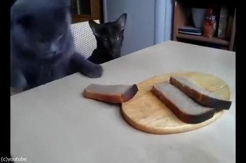 「泥棒猫2匹が私のパンを盗むとき」04