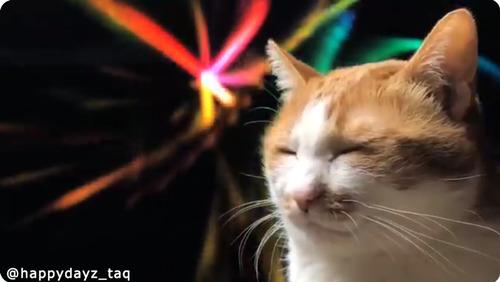 Macのアレを背景に猫を撮るだけでこんなに幻想的02