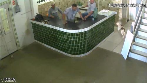 ブラジルの労働者たちが動物から逃げ惑う03