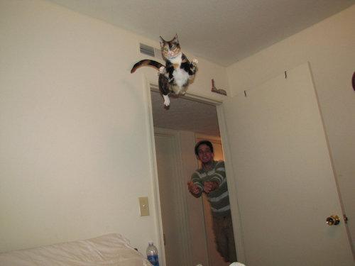 すごい猫11