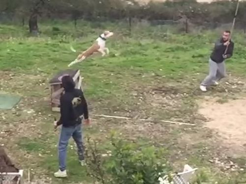 訓練された犬のジャンプ力02