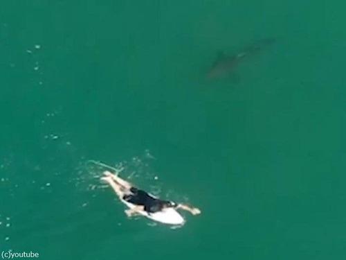ドローンの警告でサメを回避したサーファー02