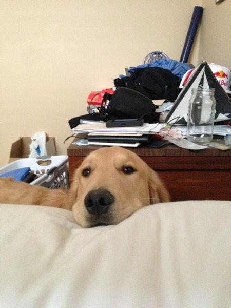 毎朝起こしてくれる犬や猫03