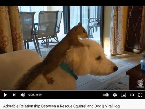 拾われたリス、犬を乗りこなす
