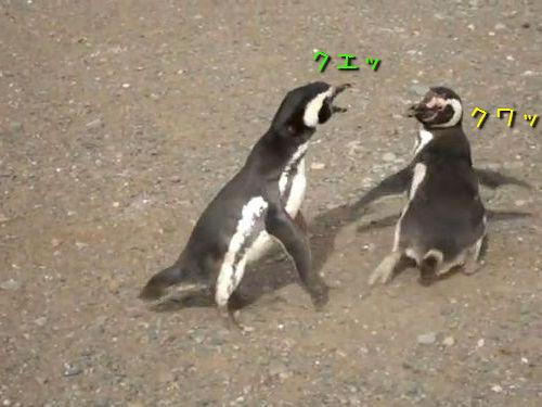 ペンギン・ファイト00