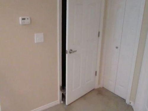 ドアを器用に開ける猫01