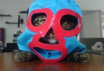 神出鬼没の猫07